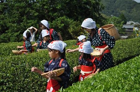 茶摘み体験02