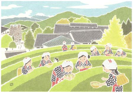チャレンジ茶摘み風景